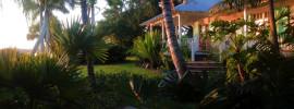 sub tropical rear garden