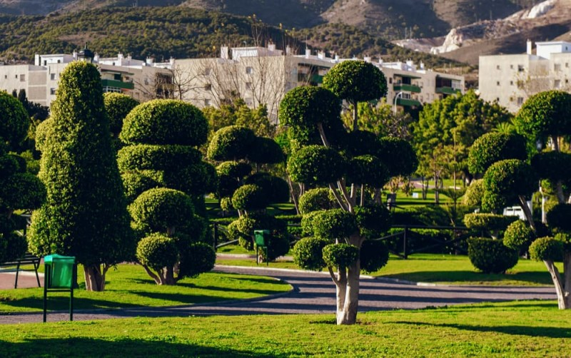Beautiful park in Spain showing careful skilled shaping of trees