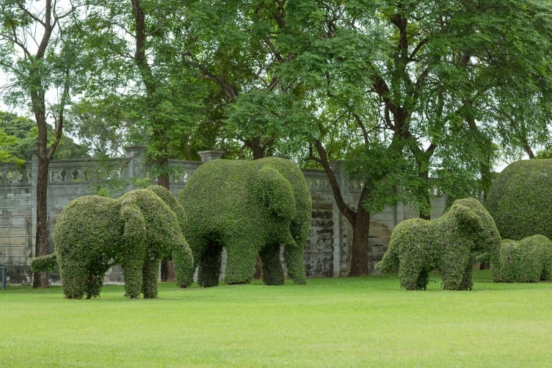Garden Topiary Forms in the form of topiary art elephant trees