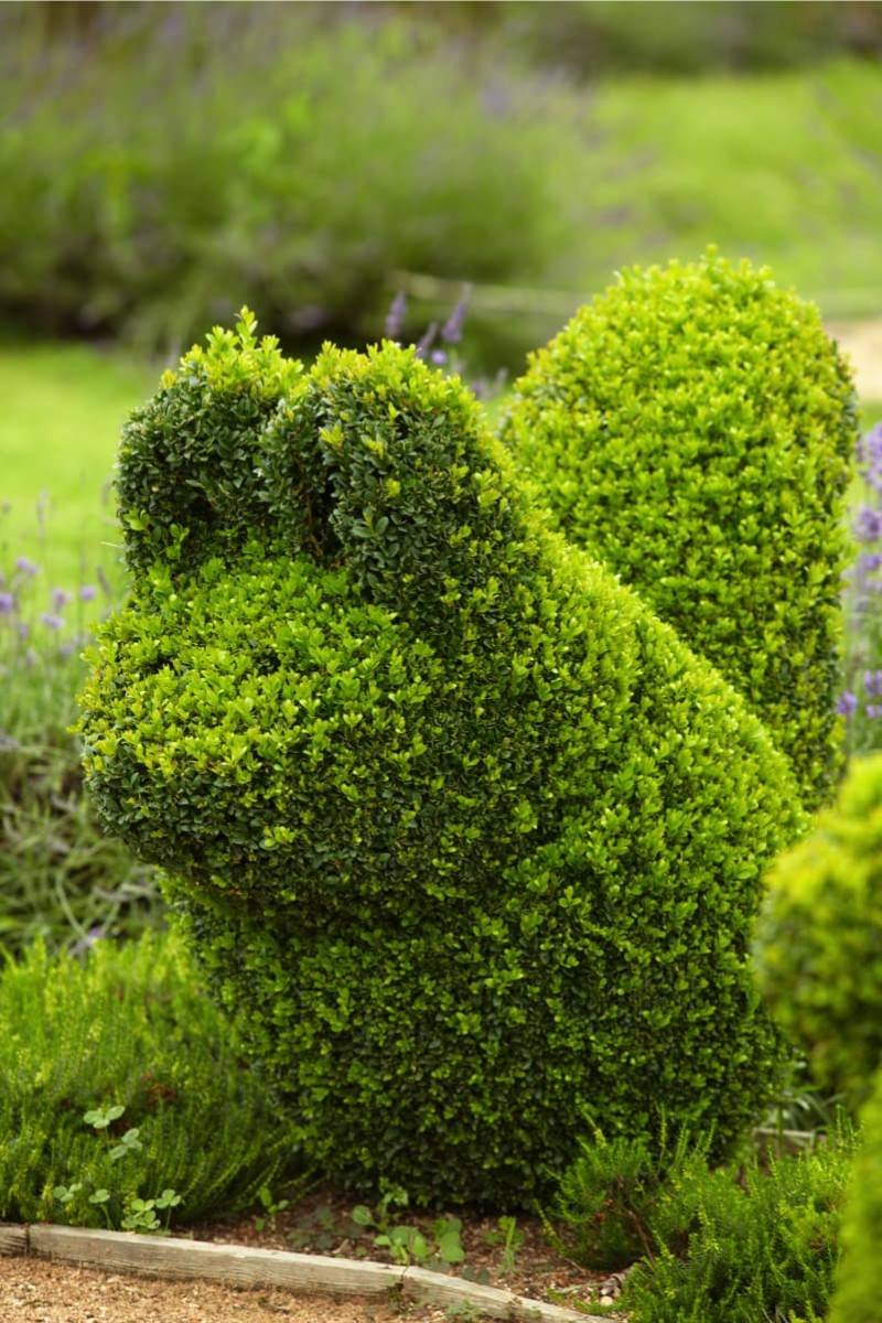 Cute Topiary art shaped squirrel