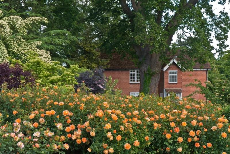 English Rose Garden Min E1435353242504   Designing A Rose Garden