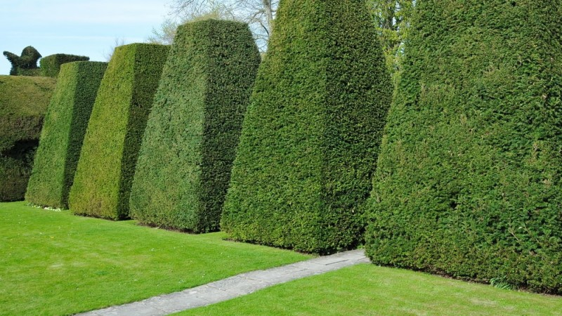 Scenic view of topiary shaped trees in a peaceful green garden