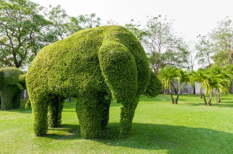 Topiary art shaped elephants from a tree in Thailand