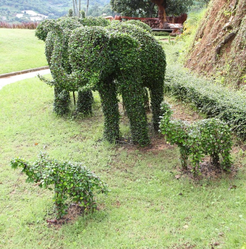 Elephant family topiary art of two adults & two baby elephants