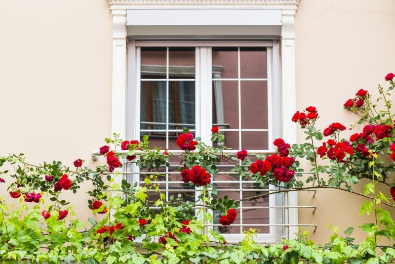 window with roses min e1435353216970 - Designing a Rose Garden