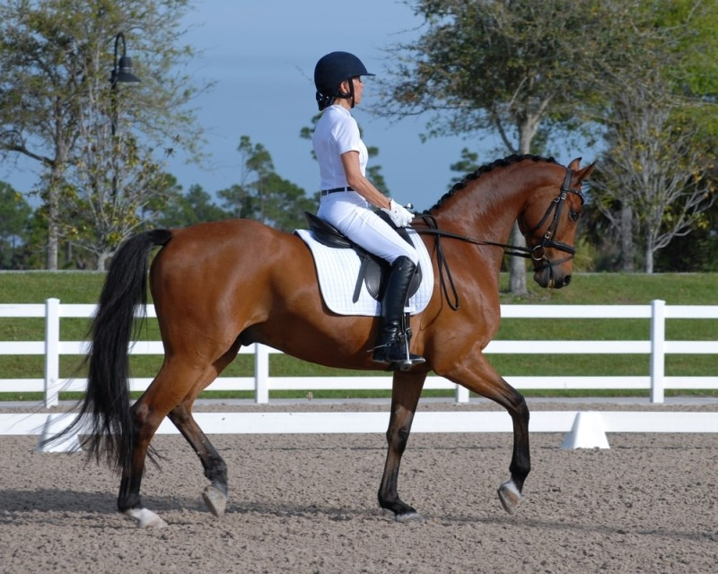 A dressage rider dressed in all white on a bay horse in an arena surrounded by a white fence and a natural setting min e1436949894301 - Horseback Riding Ranch, Horse Stables, Barns and Facilities