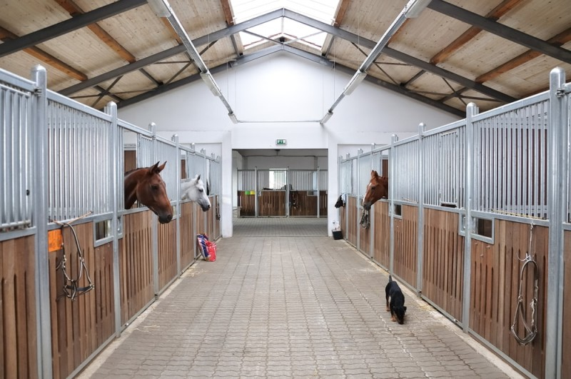 Modern clean and tidy horse stable in reasonably new building