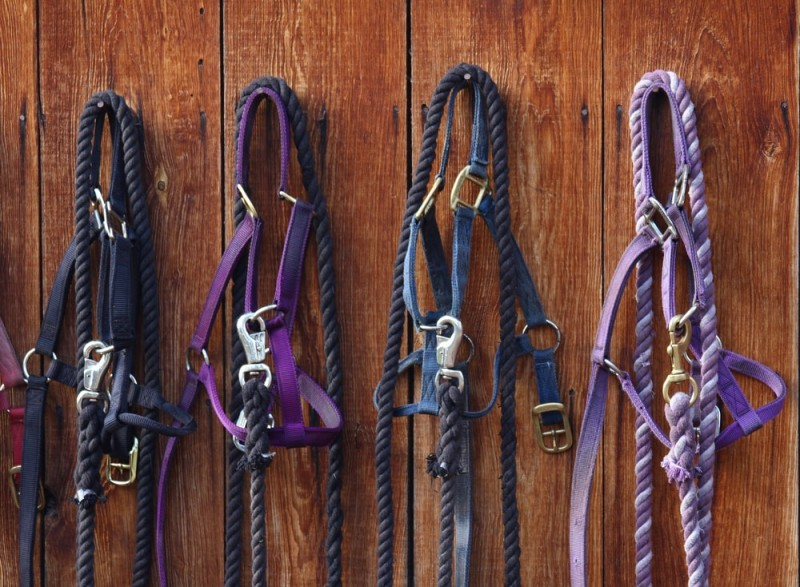 Four nylon halters hanging against a barn wall