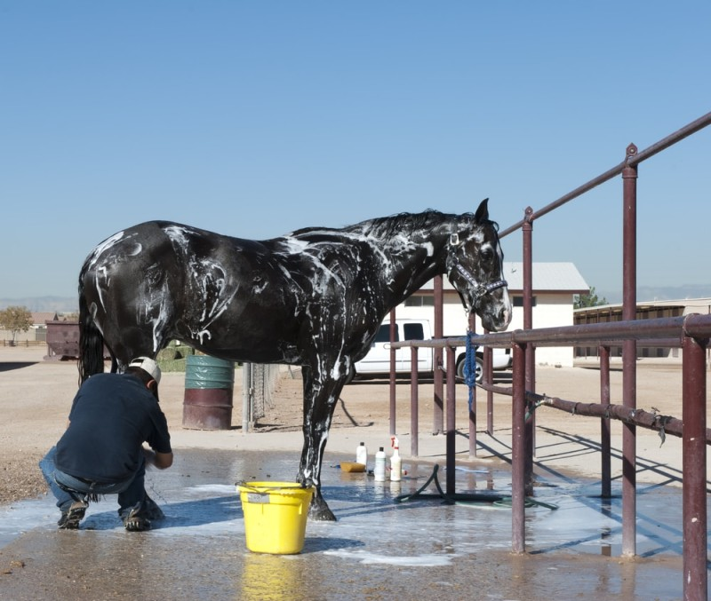 Horse getting a bath in a wash up area