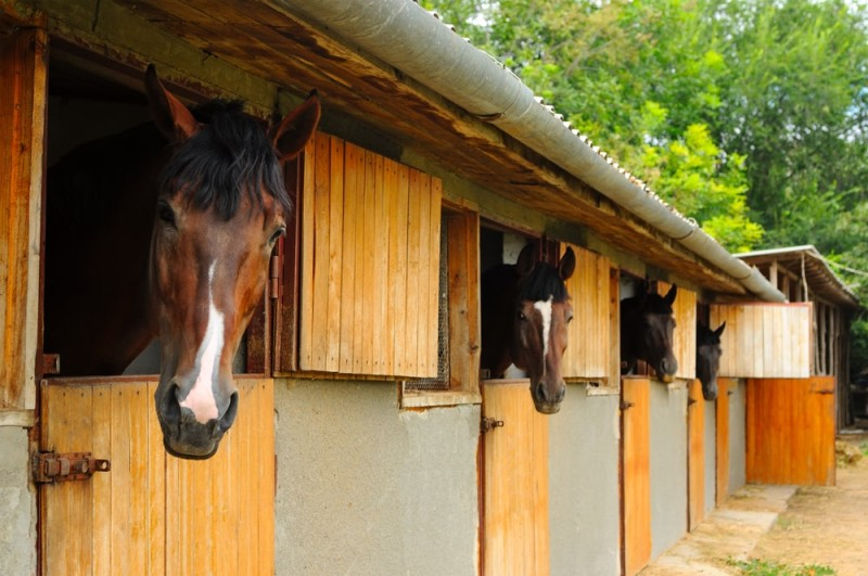 Curious horses in a stable
