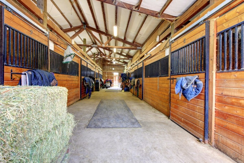 Large horse stable shed