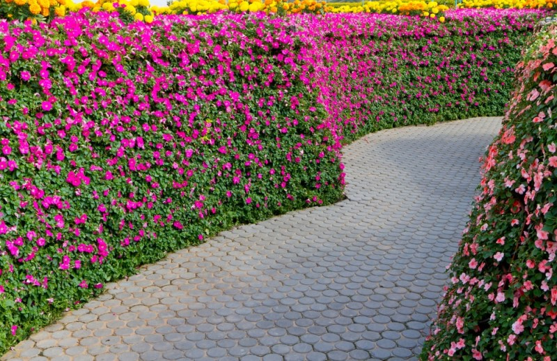 Beautiful landscaped garden path with beautiful pink flower walls