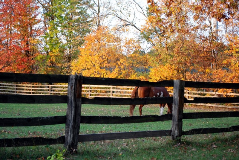 horse farm in the fall min e1436990633619 - Horseback Riding Ranch, Horse Stables, Barns and Facilities