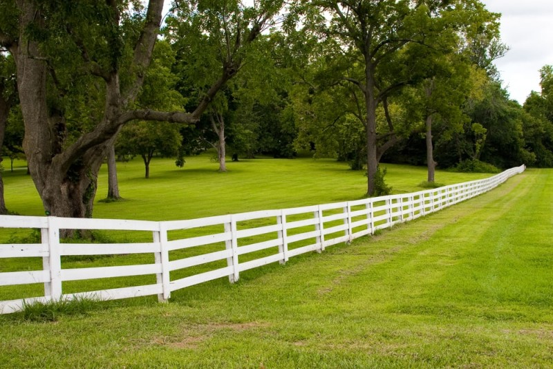 Horse farm showing trees and post and rail boundary fencing