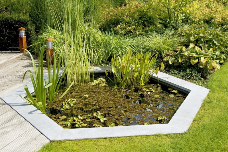 Garden Pond with pond min e1440358351267 - Backyard Pond Designs