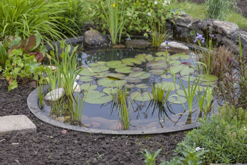 garden decoration in a cottage garden pond with water lily min e1440359318131 - Backyard Pond Designs