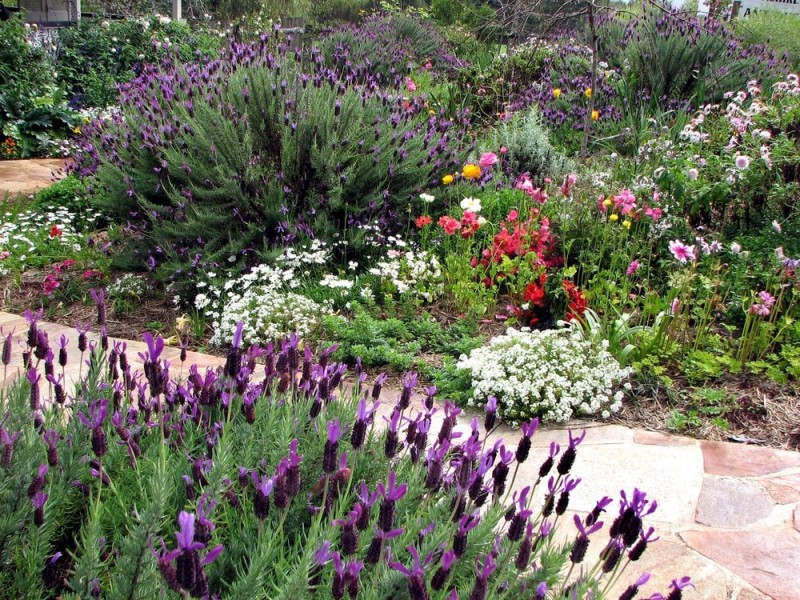 A Beautiful Lavender Rich English Cottage Style Garden