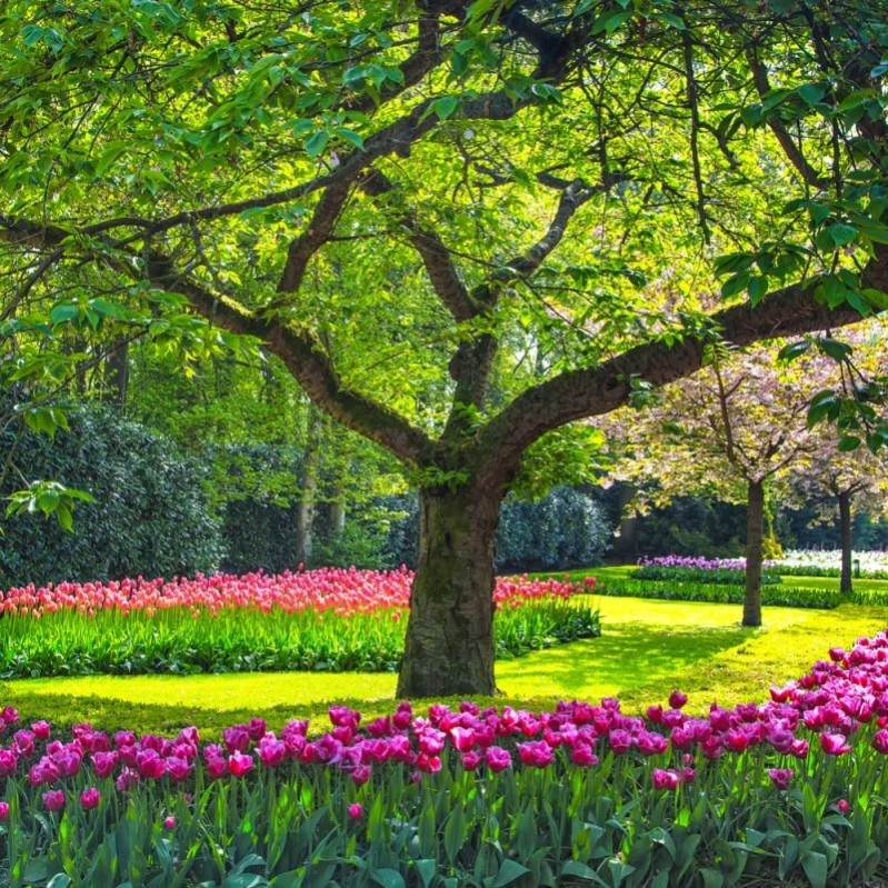 Green Lawn In A Colorful Landscaped Garden With A Variety Of Flowers
