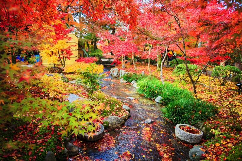 Amazing Colorful Autumn Fall Pictures