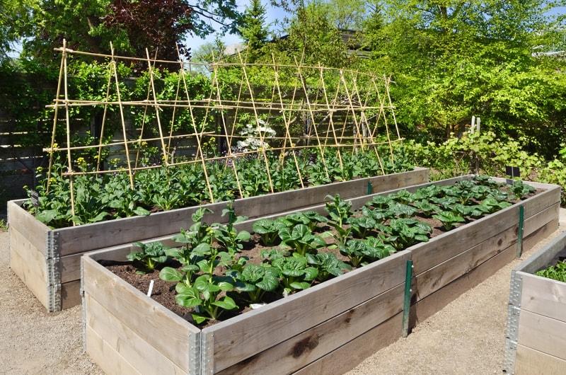 Raised bed organic vegetable gardens