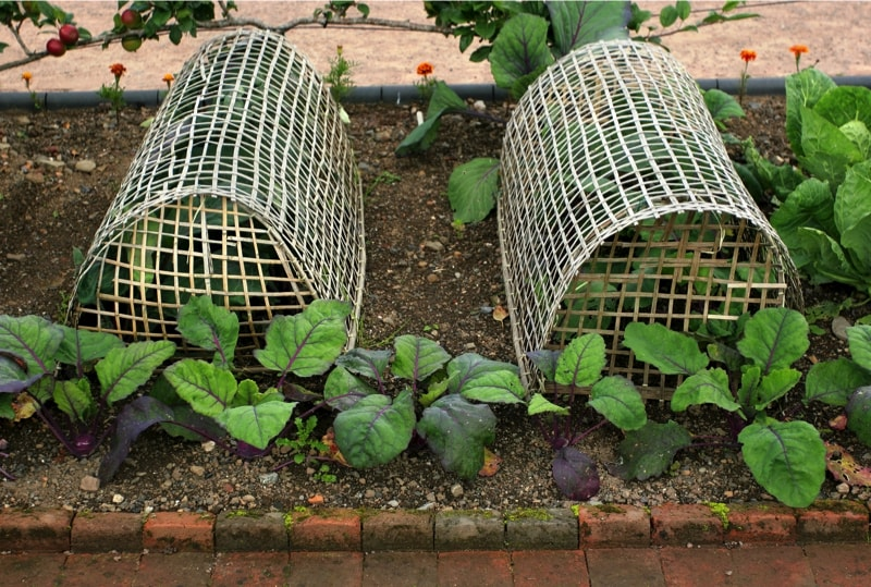 Vegetable bird protective covers