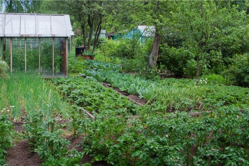 Prolific mature vegetable garden in a backyard