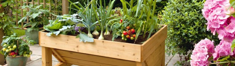 Vegetables in containers- Image via www.suttons.co.uk