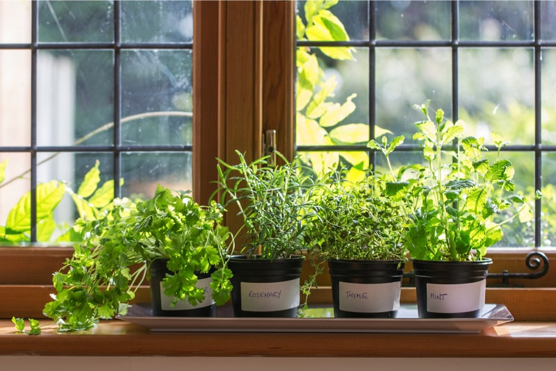 how to grow herbs at home in pots in india