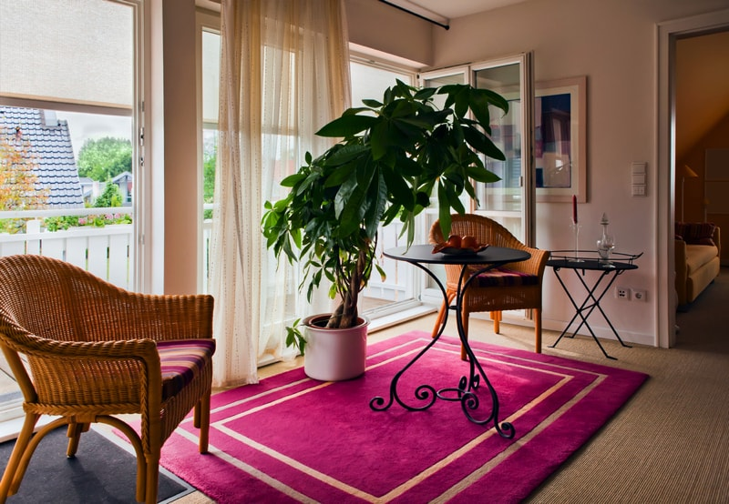Indoor house plants and pot plants for Living room with indoor plants