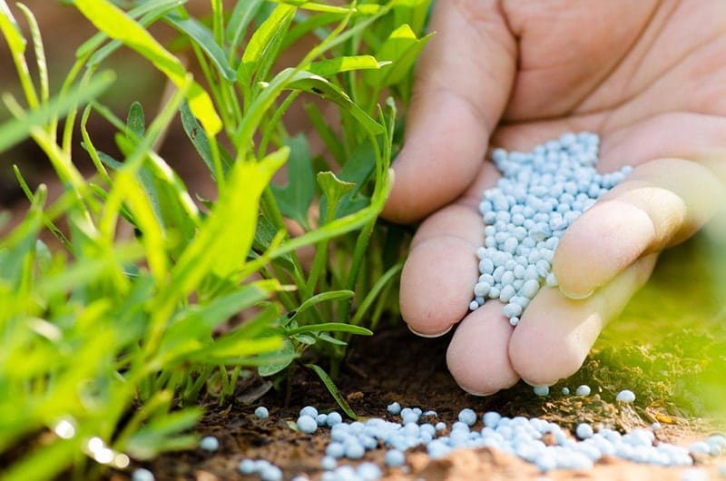Fertilize - How to Renovate an Ugly Old Lawn