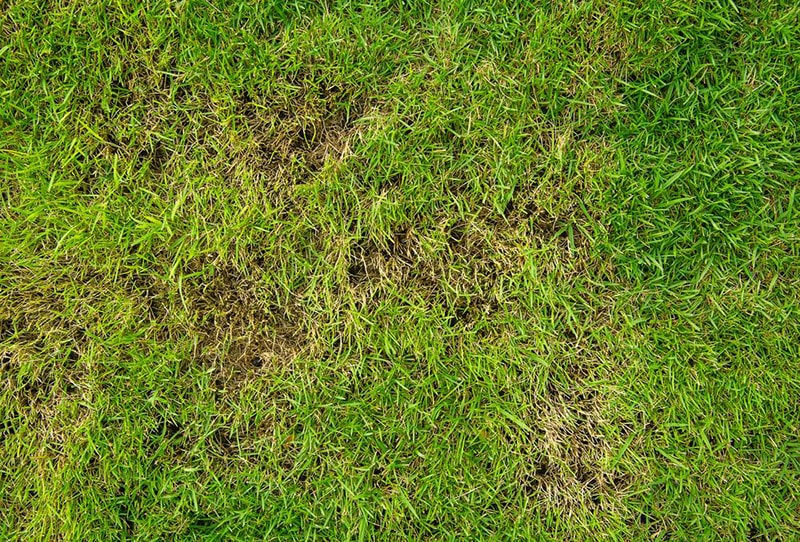 Lawn Care And Lawn Maintenance How To Renovate An Ugly