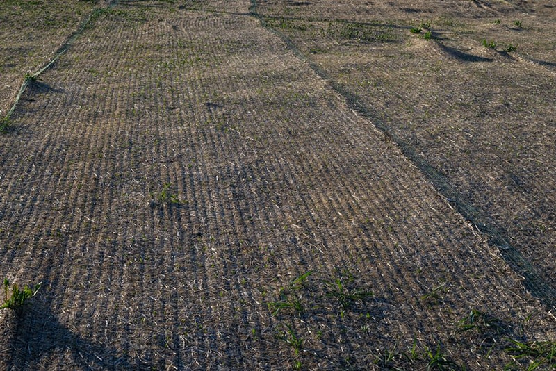 erosion control blankets - How to Renovate an Ugly Old Lawn