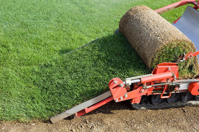 remove old grass - How to Renovate an Ugly Old Lawn