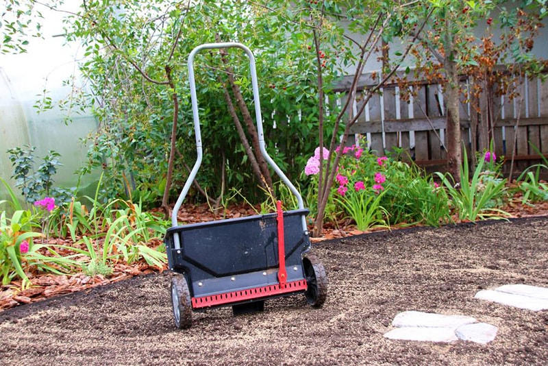 spread seed - How to Renovate an Ugly Old Lawn