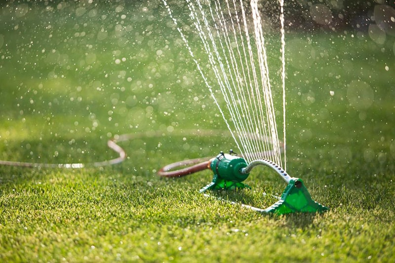 water lawn - How to Renovate an Ugly Old Lawn