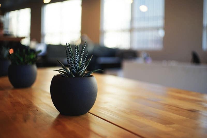 Home plants - home interior decorating
