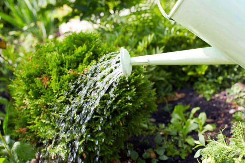 soil for raised bed gardens