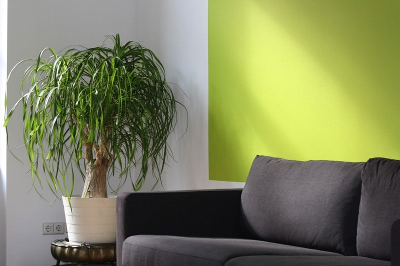 Pot plant and sofa - Think Big - Tips on How to Maximize a Small Room